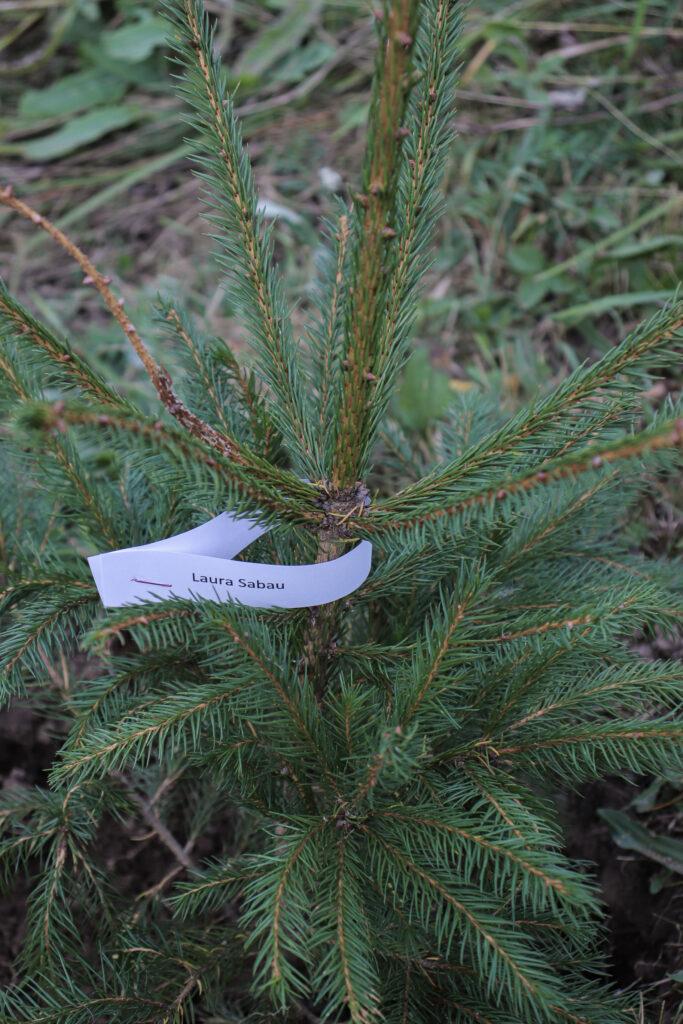 Planteaza un copac, campanie plantare, reimpadurire